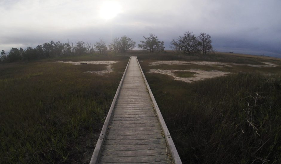 boardwalk in the mist